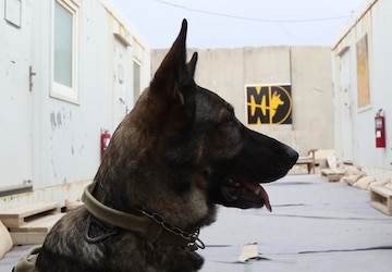 Military Working Dog Bill