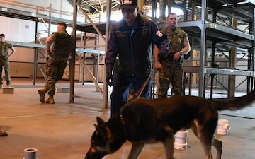 MCAS Iwakuni Military Working Dog handlers, Japanese dog handlers conduct training (Package/Pkg)