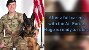 Hugo, Retired Military Working Dog