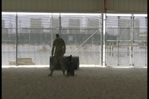 U.S. Navy Military Working Dog Team Demonstrate Their Training