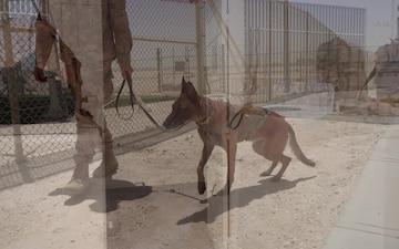 Military Working Dogs/Handlers at AUAB