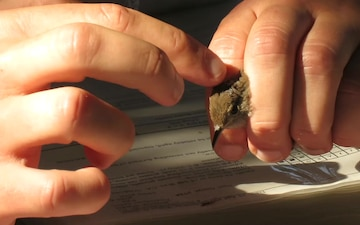 Behind the Scenes with Environmental: Bird Banding