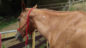 Veteran-Owned Horse Farm Provides Therapy to Veterans