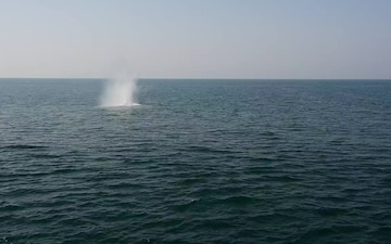 USS Ralph Johnson Conducts Live Fire Exercise