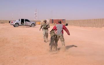 Military Working Dog Demo - Zana