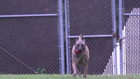 On the Job Military Working Dog Handler