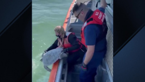 Coast Guard Turtle Rescue