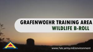 B-Roll Grafenwoehr Training Area Wildlife