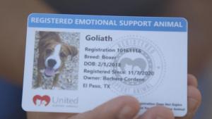 Emotional Support Dog Goliath emotionally assists OAR personnel