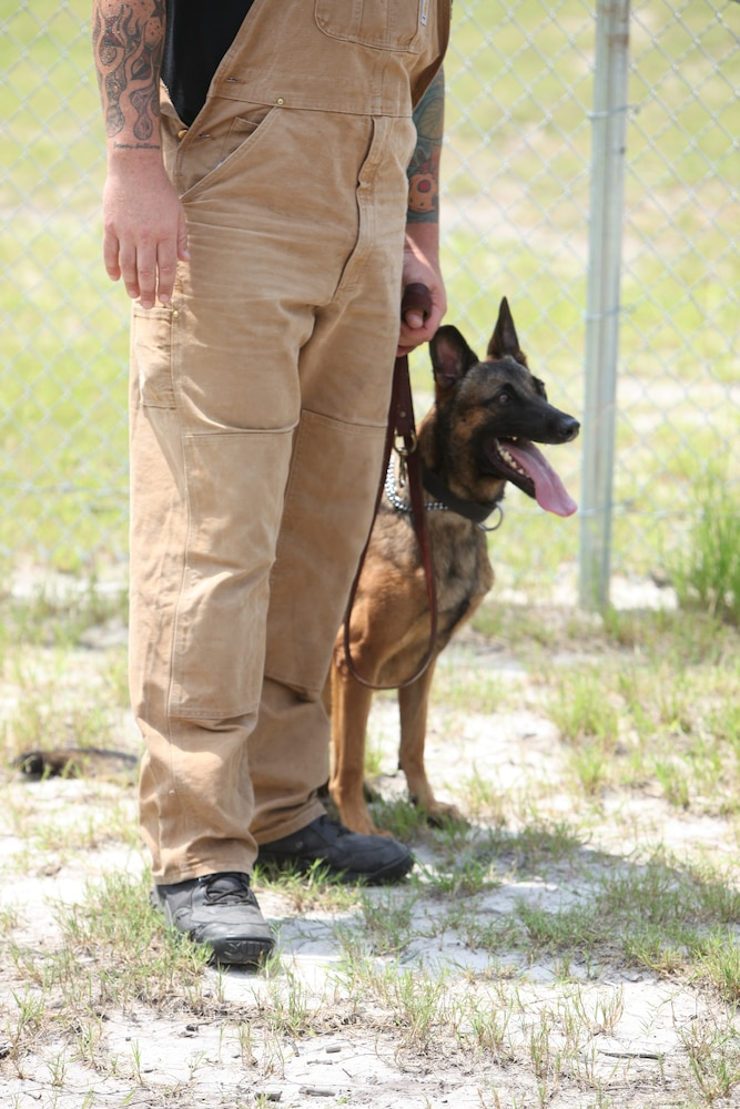 Military working dogs maintain important role beside their human counterparts