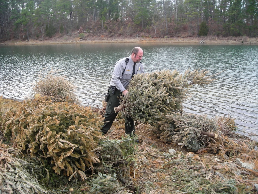Corps' Thurmond Lake Office accepts Christmas trees for recycling