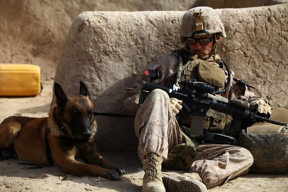 Working dogs are Marines best friend