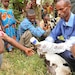 Ethiopia, US partners for veterinarian project