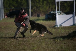 PMO Demonstrates Military Working Dog Capabilities to JROTC Students