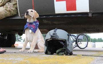 Paws on pilot gear