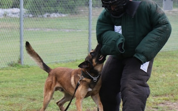 Working Dogs Tackle Threats