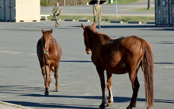 Bronco Brigade Soldiers greeted by wild horses