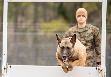 Paws on the ground: Military Working Dog handler experience